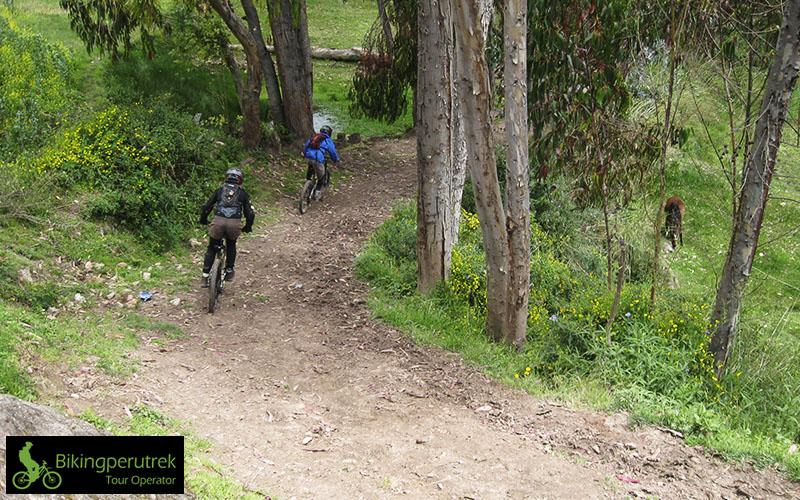 downhill chachani